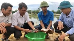 Nuôi loài cá đặc sản trơn nhớt đuôi dài, bán 150-160.000 đồng/kg
