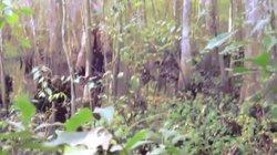 """Video: Bằng chứng rõ ràng nhất về quái vật huyền thoại """"Chân to"""""""