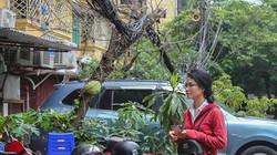 """Ảnh-clip: """"Mạng nhện tử thần"""" rình rập ở nhiều tuyến phố Hà Nội"""