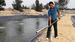 Quảng Bình: Tỷ phú đào ao trên cát nuôi loài ốc hương, bán đắt tiền