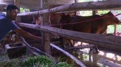 Quảng Ngãi: Hiệu quả bất ngờ từ mô hình chăn nuôi kết hợp