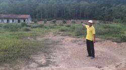 """Quảng Ninh: Rừng phòng hộ bị """"hô biến"""" thành đất trồng cây lâu năm"""