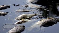 Lý giải nguyên nhân cá chết hàng loạt ở hồ Trúc Bạch, Yên Sở