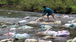 Vứt lợn chết ra môi trường  bị xử lý thế nào?