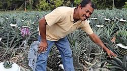 Dốc sạch tiền trồng quả bán đầy đường, vợ chồng kiếm hơn 40 triệu/tuần