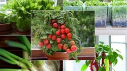 Top 9 loại rau củ vô cùng thích hợp để trồng ở cửa sổ nhà bếp