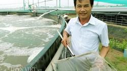 Tiên phong nuôi tôm hồ nổi quy trình ưu việt, thu 20 tỷ ở Bạc Liêu