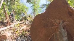 Vụ bắt gỗ lậu ở Đắk Lắk: Phát hiện nhiều điểm tập kết gỗ quy mô lớn