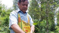 """Lạng Sơn: Ông Kời rời nhà lên rừng """"ở ẩn"""" trồng toàn cây thơm nức"""