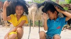 Hà Tĩnh: Bắt được con chim lạ khổng lồ vùng vẫy giữa cánh đồng