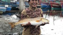 Lại bắt được 1 cặp cá lạ nghi sủ vàng tiền tỷ ở sông Loan Quảng Bình
