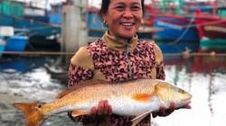 Quảng Bình: Bắt được 2 con cá lạ trên sông Loan, giá hơn 1 tỷ đồng