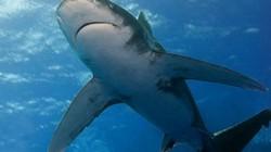 Vụ cá mập ăn thịt người nhiều nhất lịch sử trong thảm kịch đắm tàu 900 người chết