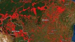 Cháy rừng Amazon tàn phá Trái đất hơn vũ khí huỷ diệt hàng loạt