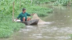 Bắc Giang: Ẩn họa sông ngòi tràn lan loài cá da nhám, đen xì, có con to như bắp chân