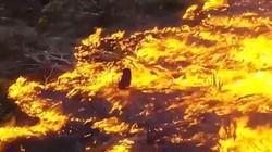 Khí độc từ đám cháy rừng Amazon lan khắp Brazil