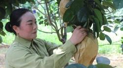 Lạ mà hay: Cho bưởi da xanh xen canh chè chát ở Nghệ An