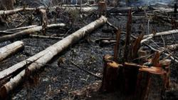 Quy định phòng, chữa cháy rừng: Văn bản nhiều nhưng hiệu quả bao nhiêu?