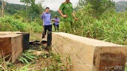 Điều tra vụ tàng trữ gỗ, phát hiện hơn 200 gốc cây bị đốn hạ