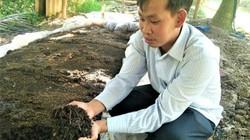 Trai An Giang bỏ việc nghìn đô về nuôi trùn quế, lãi nửa tỉ/tháng