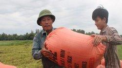 Ảnh, clip: Nông dân Hà Tĩnh thức xuyên đêm gặt lúa chạy bão Podul
