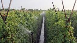 Biến đồng hoang thành vựa rau xanh tươi, bỏ túi hàng trăm triệu