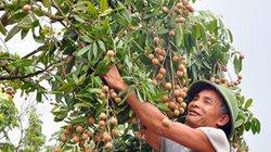 Thượng nghị sĩ, Bộ trưởng Nông nghiệp Úc thích thú ăn nhãn Việt Nam