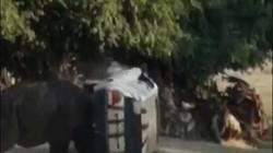 Đức: Kinh hoàng khoảnh khắc tê giác nổi điên tấn công xe chở người trông giữ thú