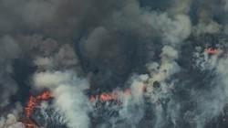"""Hai vụ cháy """"nóng"""" nhất Google tuần qua: Rừng Amazon và nhà máy Rạng Đông"""