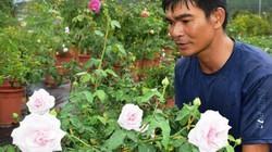 """U40 trồng 400 cây hoa hồng cổ """"tuổi lão làng"""" ở Lâm Đồng"""