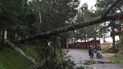 Đà Lạt: Người đi đường hốt hoảng vì nhiều cây xanh ngã đổ