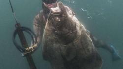 Thợ lặn câu được thủy quái có kích thước siêu to, khổng lồ ở Mỹ