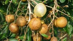 """Nhãn bắp cải giá """"lên đỉnh"""" 150.000đ/kg; dưa hấu, dừa xiêm rớt thảm"""