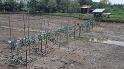 Đầu tư 18 tỷ đồng cải tạo đất bỏ hoang để nuôi tôm, 3 năm được… 3ha