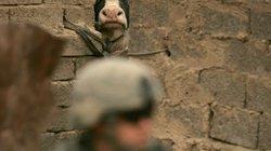 """Khủng bố IS biến bò thành """"chiến binh cảm tử"""""""