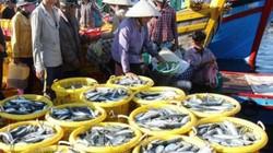 Gặp luồng cá cơm, cá nục dày đặc, ngư dân lãi hơn 100 triệu/chuyến
