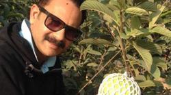 Công ty thua lỗ, người đàn ông về trồng quả rẻ bèo có đầy ở Việt Nam kiếm tiền tỷ