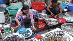 Đồng Tháp: Nước lũ về, bắt được cá tôm, chợ nhộn nhịp hẳn lên
