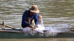 Miền Tây mùa nước nổi: Lũ đỏ ngầu tràn đồng, đã bắt được cá linh