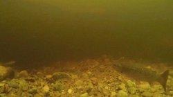 Video: Lươn khổng lồ lộ diện ở nơi nghi có quái vật hồ Loch Ness