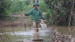 Clip: Cheo leo qua những cây cầu ván gỗ thu phí 5.000 đồng