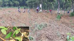 """""""Thần dược phòng the"""" xứ Bắc bén rễ trên quê nghèo ở Quảng Ngãi"""