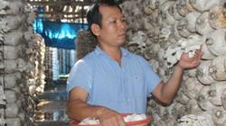 Quảng Ngãi: Những mô hình  sản xuất nông nghiệp sạch, dân giàu