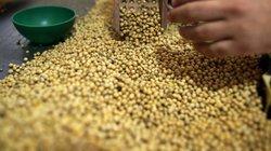 Tẩy chay nông sản Mỹ, Trung Quốc quay sang nhờ cậy quốc gia khác