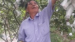 Ninh Bình: Trồng 200 cây ổi lê Đài Loan, hái 1 tạ trái/ngày, lái mua sạch