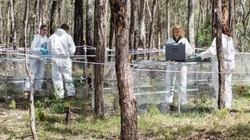 """Úc: Phát hiện rợn người về những cánh tay chuyển động trong """"trang trại người chết"""""""