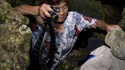 Hãi hùng tay không bắt con độc hơn cả hổ mang, giá gần 400.000 đồng/con