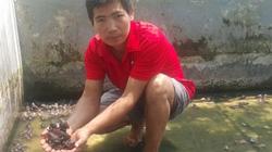 """Nam Định: 8X về quê nuôi loài ếch """"hung dữ"""", kiếm 30 triệu/tháng"""