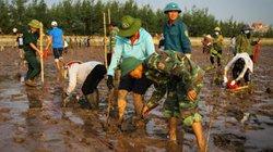 Clip: Hàng trăm bạn trẻ trồng 8.000 cây bần phục hồi rừng ngập mặn
