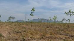 Phó Thủ tướng Vương Đình Huệ xử lý vụ 12.000ha cao su bỏ hoang